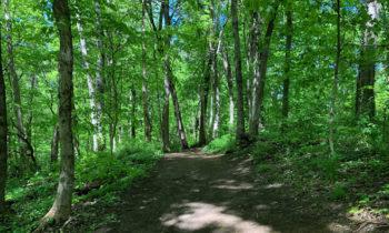 Ancient Paths and Shofar